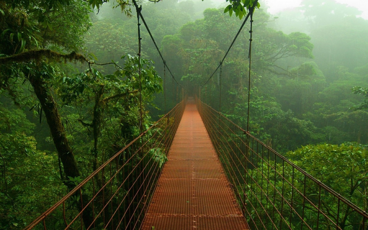 world_bridge_in_the_forests_of_the_amazon_095798_12